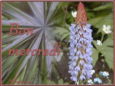 Image du Blog oceanamis.centerblog.net